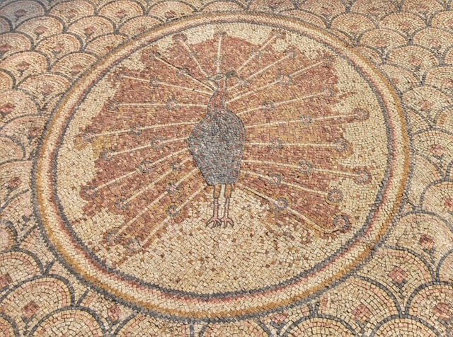 capernaum-peacock-mosaic