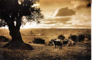 elia-photo-mount-of-olives